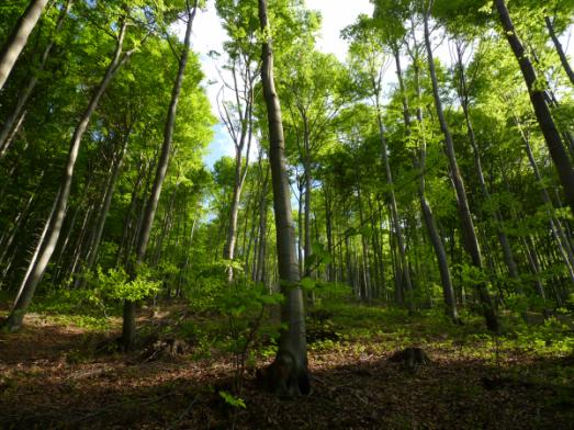 trees-resized-600